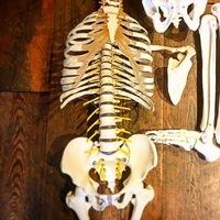 Beauty & Relax Deborah - Yin Yoga anatomie.